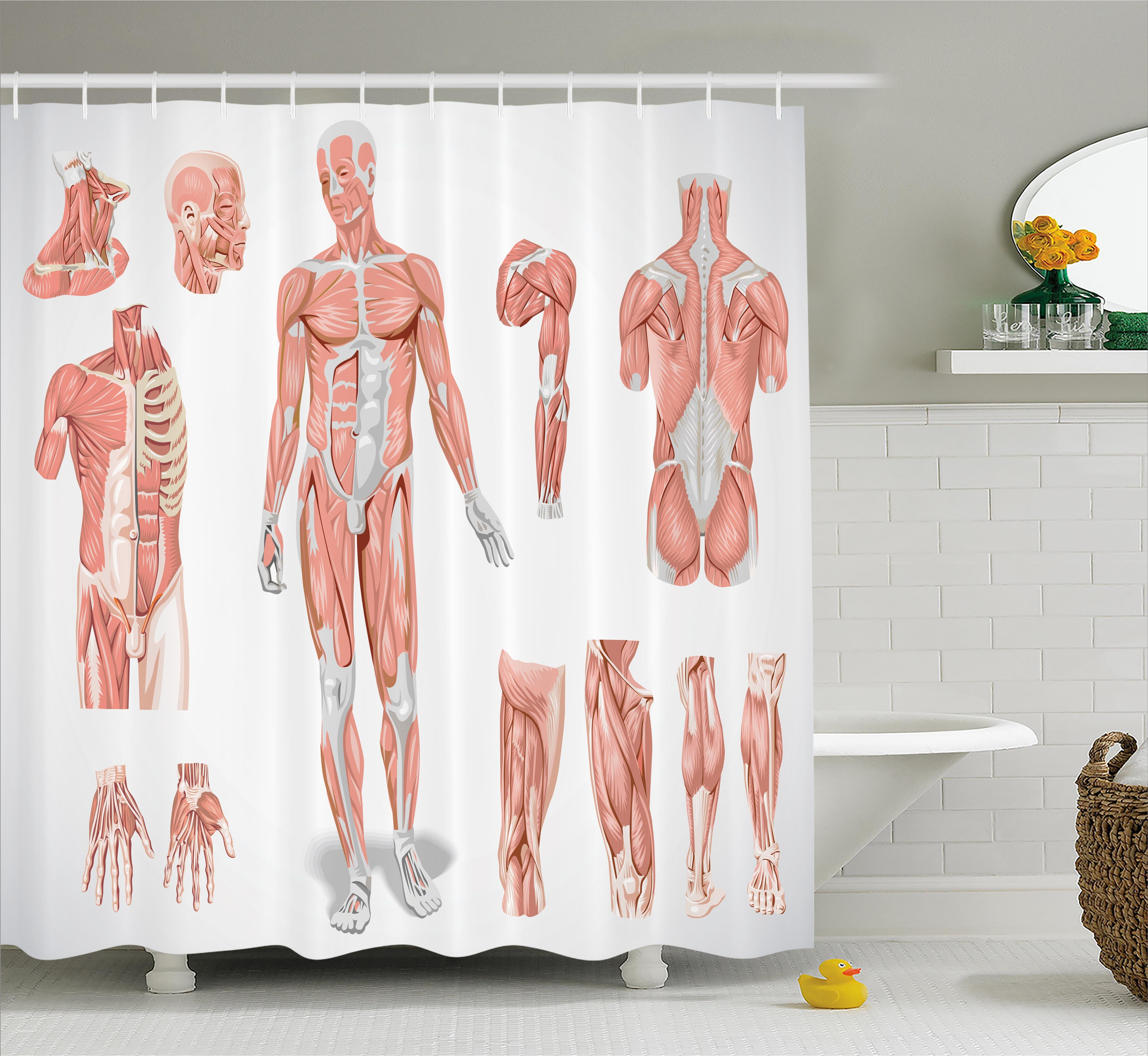 Ambesonne Human Anatomy Inner Muscle System Skin Structure With