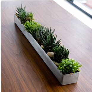 Long Indoor Planter Box | Wayfair