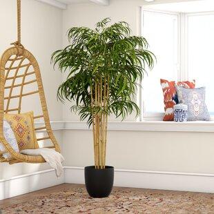 Bamboo You Ll Love Wayfair
