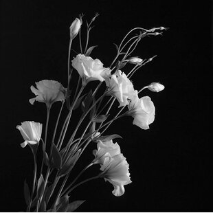 White flower canvas print wayfair white flowers gray photographic print mightylinksfo