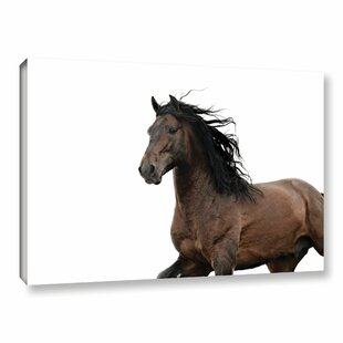 Dark Horse Photographic Print On Wrapped Canvas