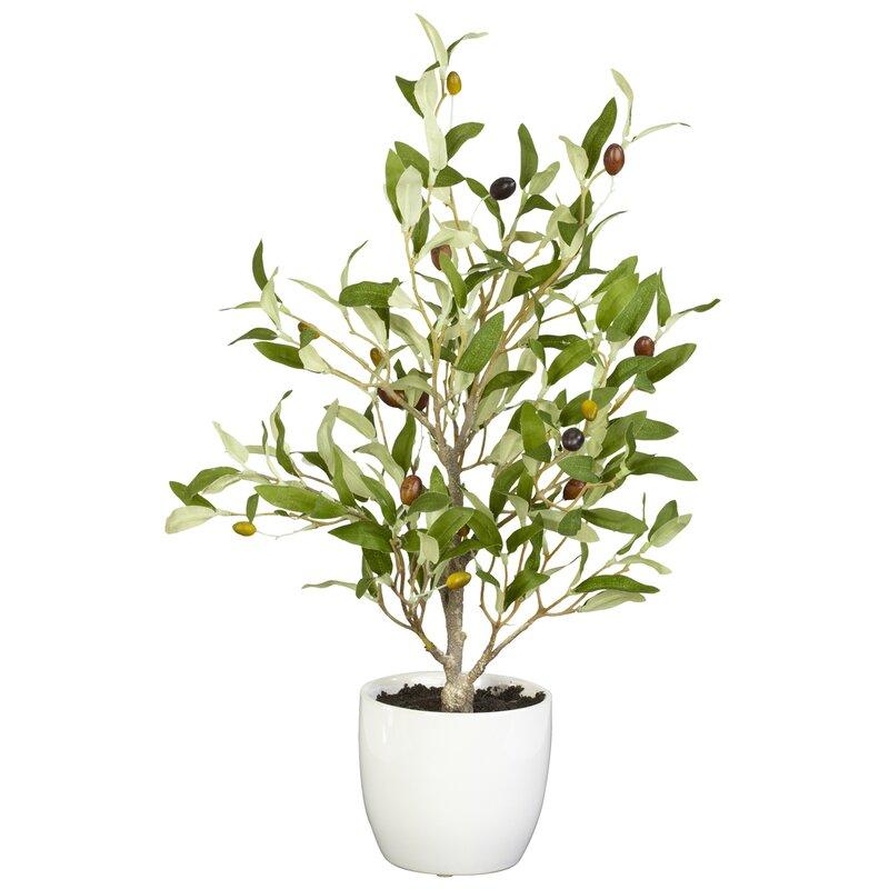 Olive Silk Plant