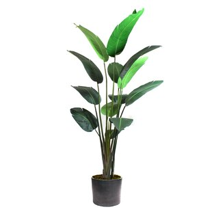 Bird Of Paradise Tree Wayfair