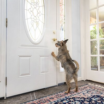 Pet Doors Dog Amp Cat Doors You Ll Love Wayfair