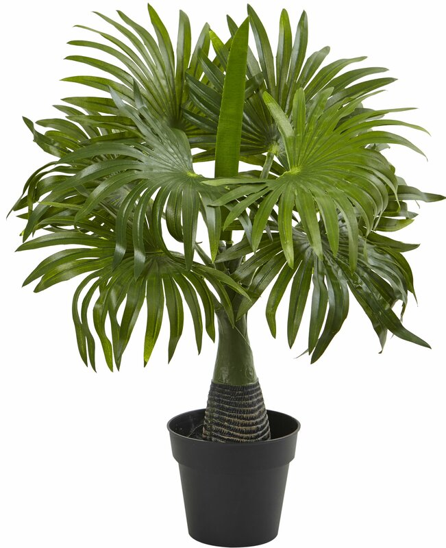 entracing palm tree type house plant. Areca  Fountain and Banana Palm Desktop Plant Set in Pot Nearly Natural