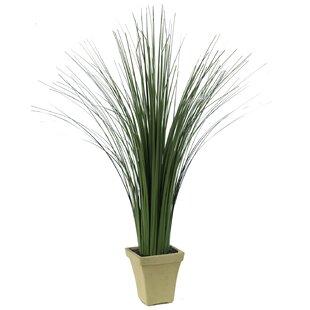 Tall Floor Grass In Pot