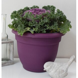 Self Watering Violet Pots Wayfair