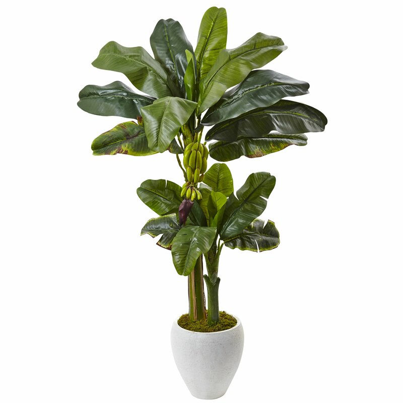entracing palm tree type house plant. Double Stalk Banana Tree in Planter Nearly Natural  Reviews Wayfair