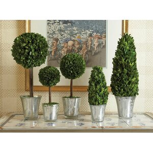 5 Piece Round Tapered Topiary in Pot Set