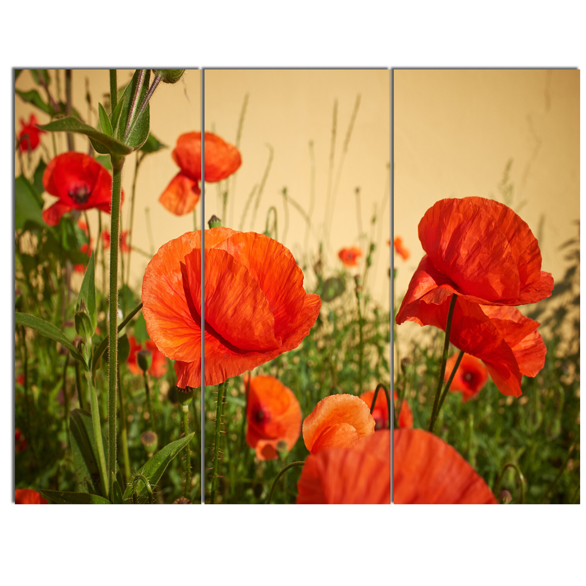 Designart Colorful Red Poppy Flower Field 3 Piece Photographic