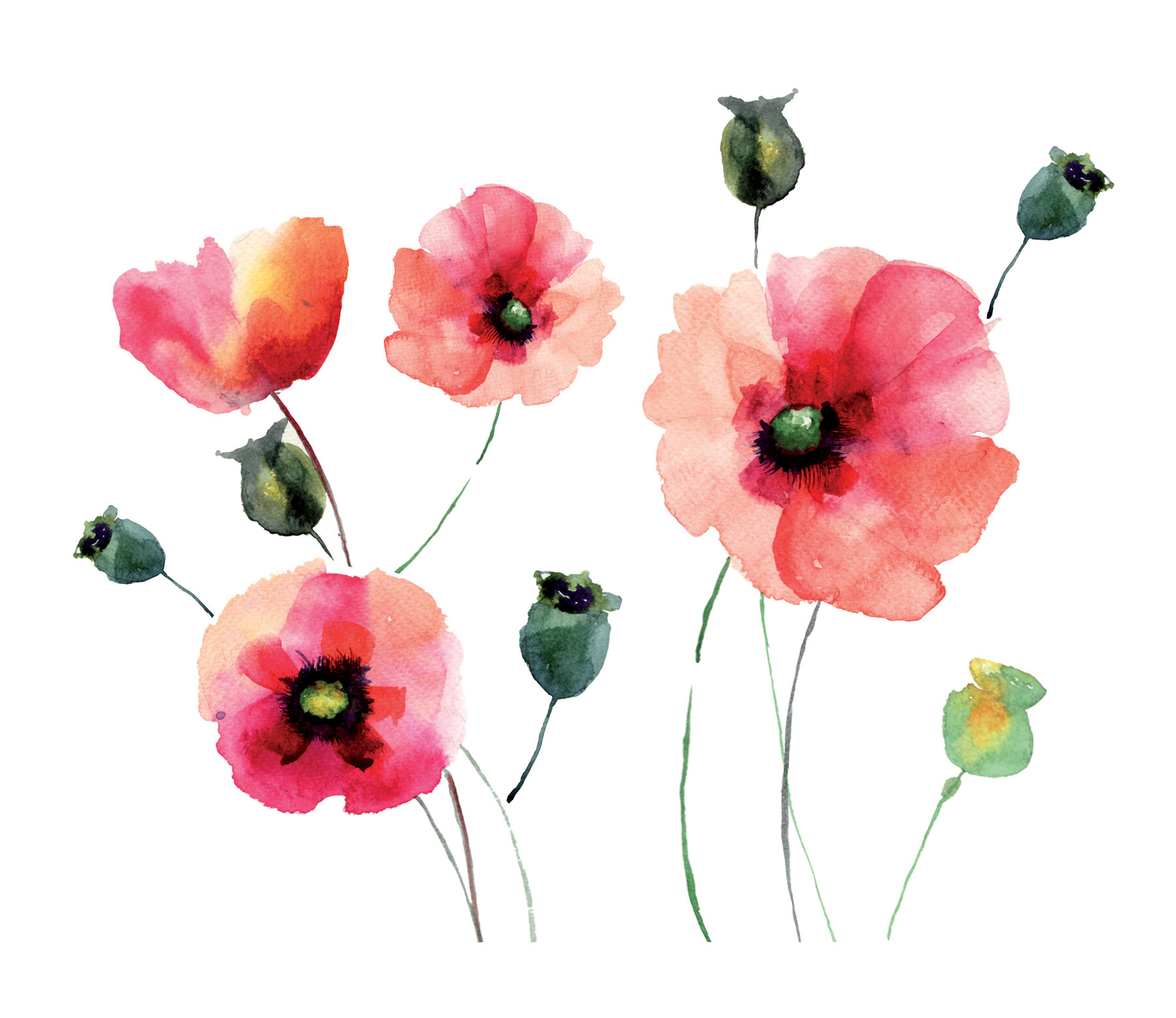 Home Decor Line Watercolor Poppies Wall Decal U0026 Reviews | Wayfair
