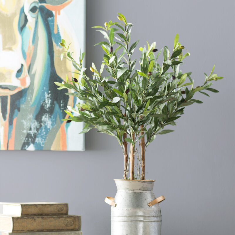 Laurel Foundry Modern Farmhouse Olive Tree in Pot & Reviews | Wayfair