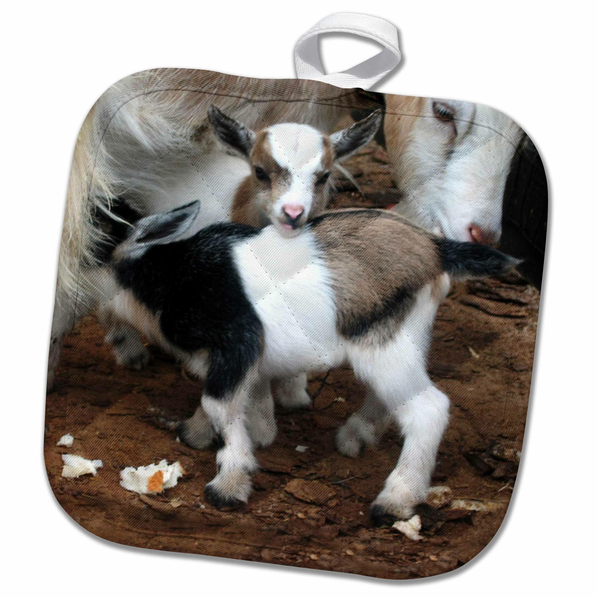 Pygmy Goat Family Pot Holder