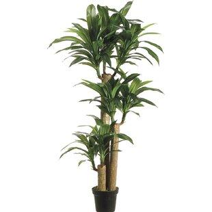 faux plants & trees   birch lane Faux Indoor Plants