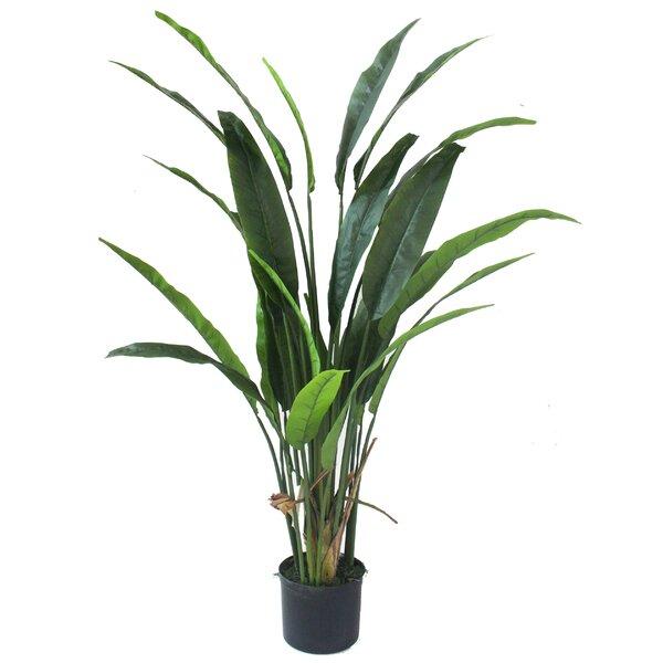 Bay Isle Home Bird Of Paradise Silk Palm Plant In Pot Wayfair