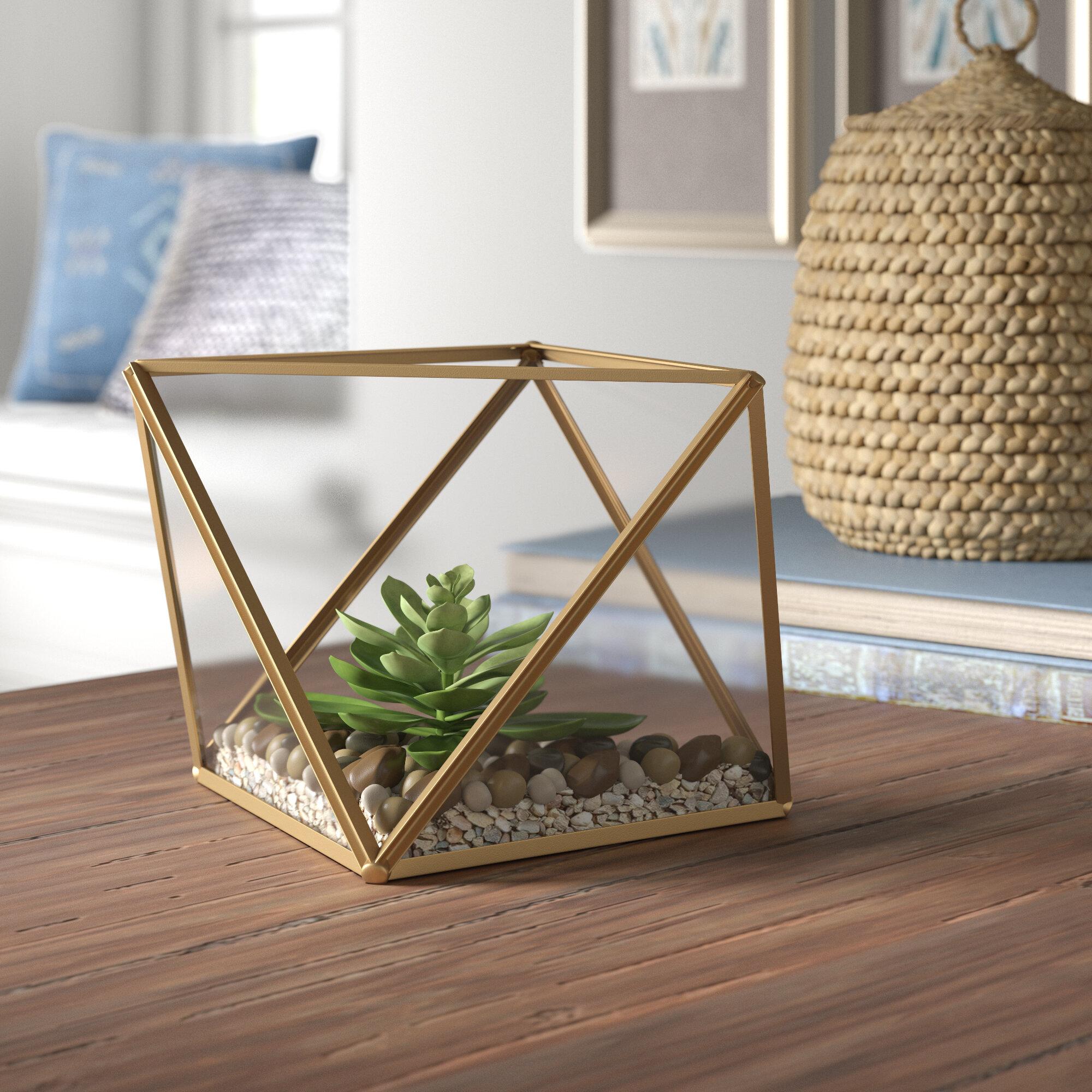 Mistana Desktop Succulent Plant In Glass Terrarium Reviews Wayfair