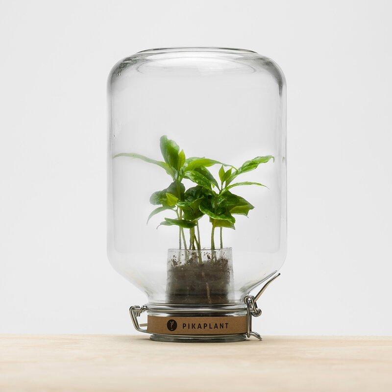 hokku designs terrarium topf mit bew sserungssystem. Black Bedroom Furniture Sets. Home Design Ideas