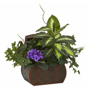 African Violet And Mix Greens Fl Arrangement In Chest
