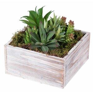 Succulent Arrangement Succulent Plant in Planter