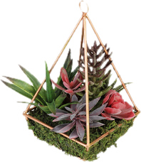 Artificial flowers plants youll love wayfair succulents mightylinksfo