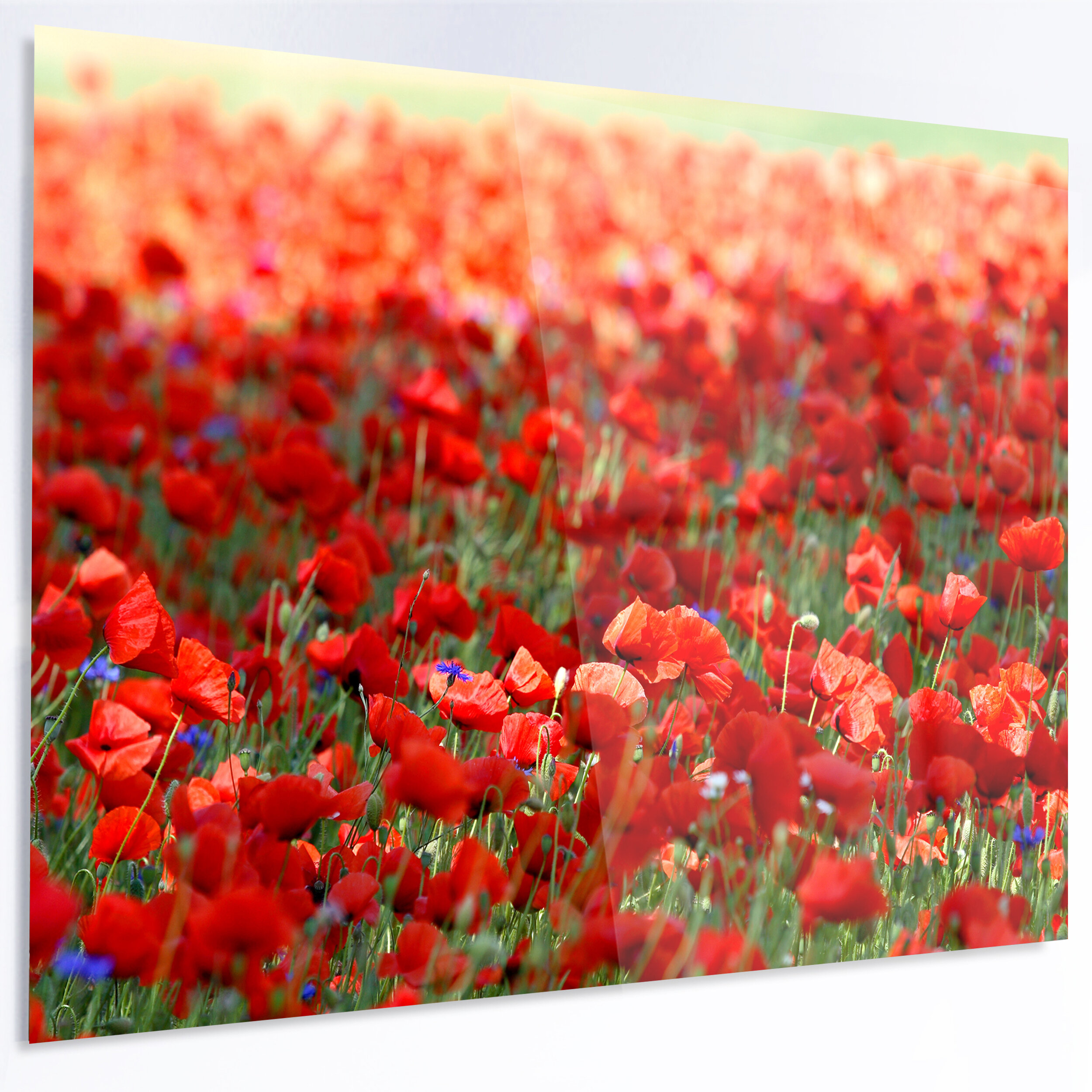 Designart Thick Red Poppy Flower Field Photographic Print On Metal