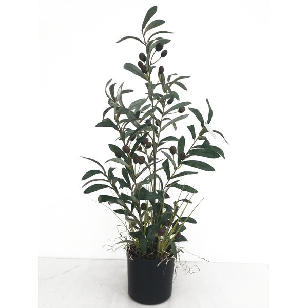 Faux Olive Tree Wayfair