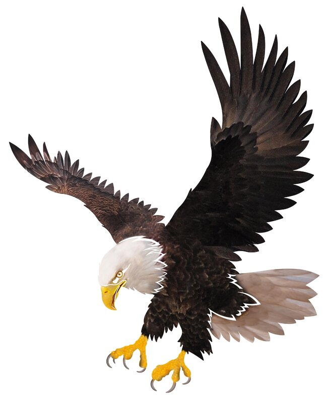 Next innovations flying eagle wall dcor reviews wayfair flying eagle wall dcor altavistaventures Images