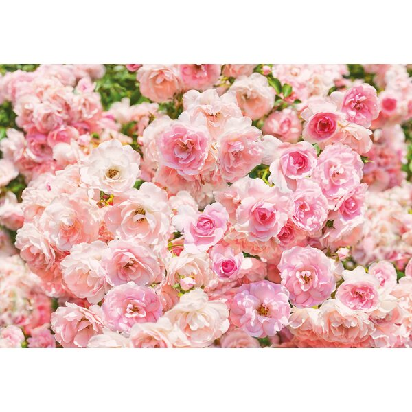 garden wall mural wallpops komar rosa 1208 x 100 wall mural reviews wayfair