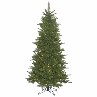 durango slim 75ft green spruce artificial christmas tree with white lights and stand - 75 Ft Slim Christmas Tree