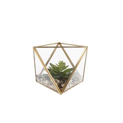 Mistana Desktop Succulent Plant in Glass Terrarium
