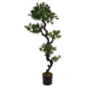 Bonsai Indoor Plants You\'ll Love | Wayfair