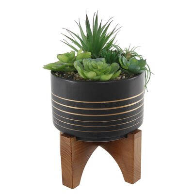 Bloomsbury Market Succulent Plant in Pot Base Color: Black