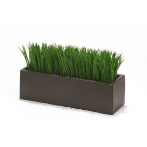 Grass in Rectangular Stone Planter
