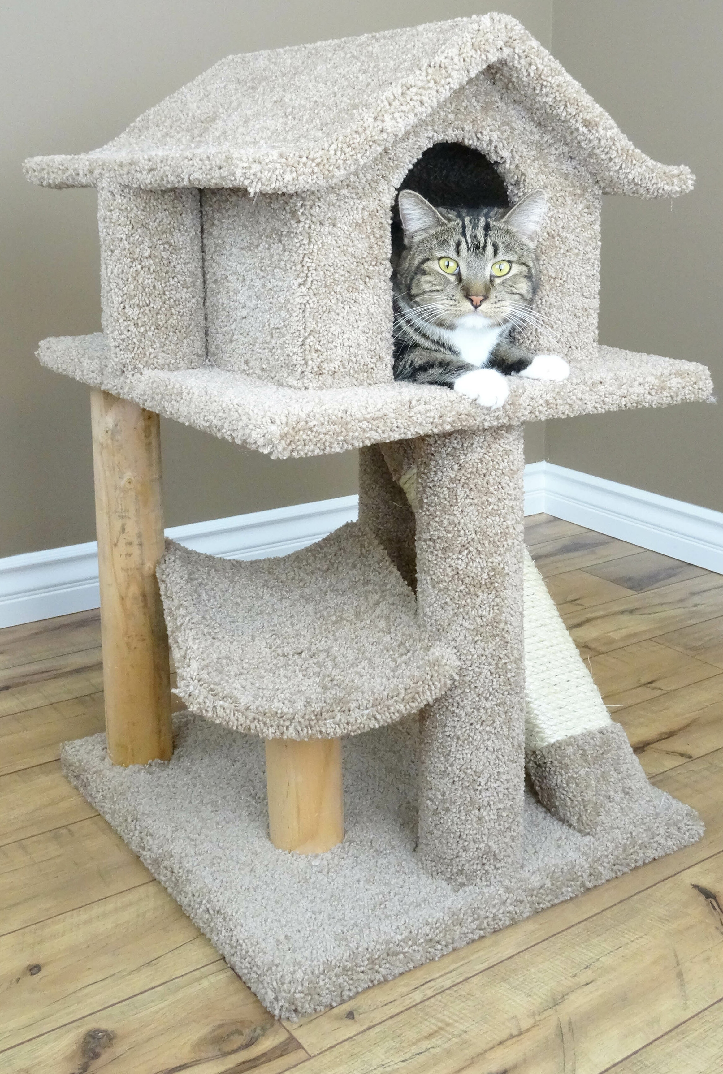 lakaysports cat uk the largest from s modern all online tree furniture com gigantic petco