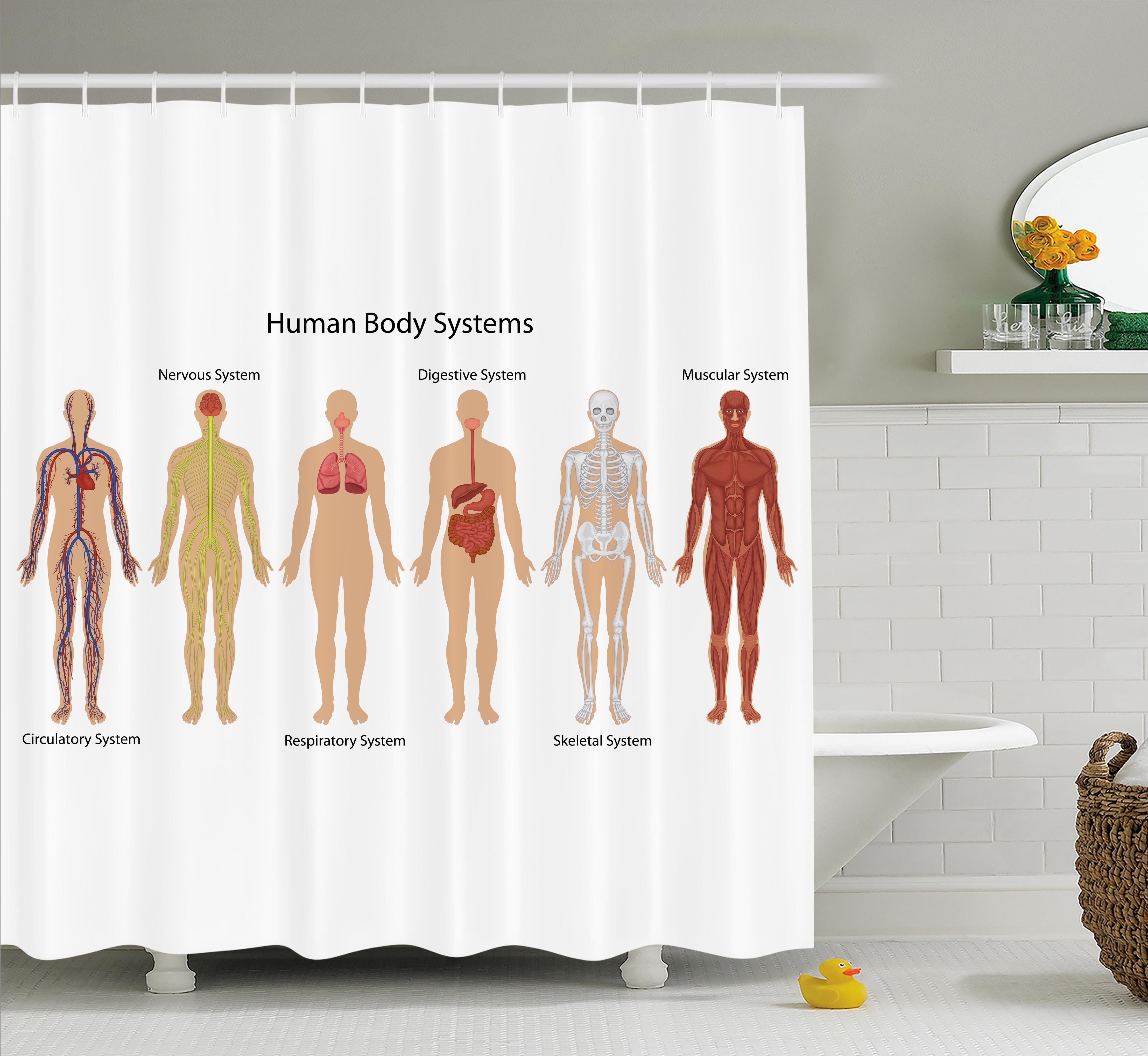 Ambesonne Human Anatomy Human Body With Central Nervous Network ...