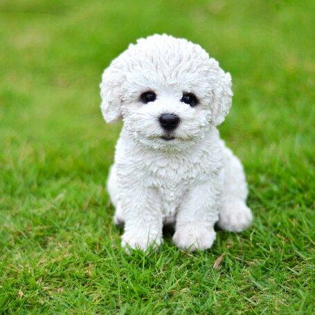 Hi Line Gift Ltd Sitting Bichon Frise Puppy Statue