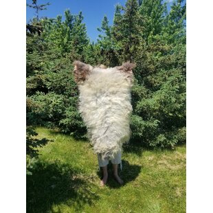 Reviews Tania Handmade Sheepskin/Wool White Area Rug By Millwood Pines