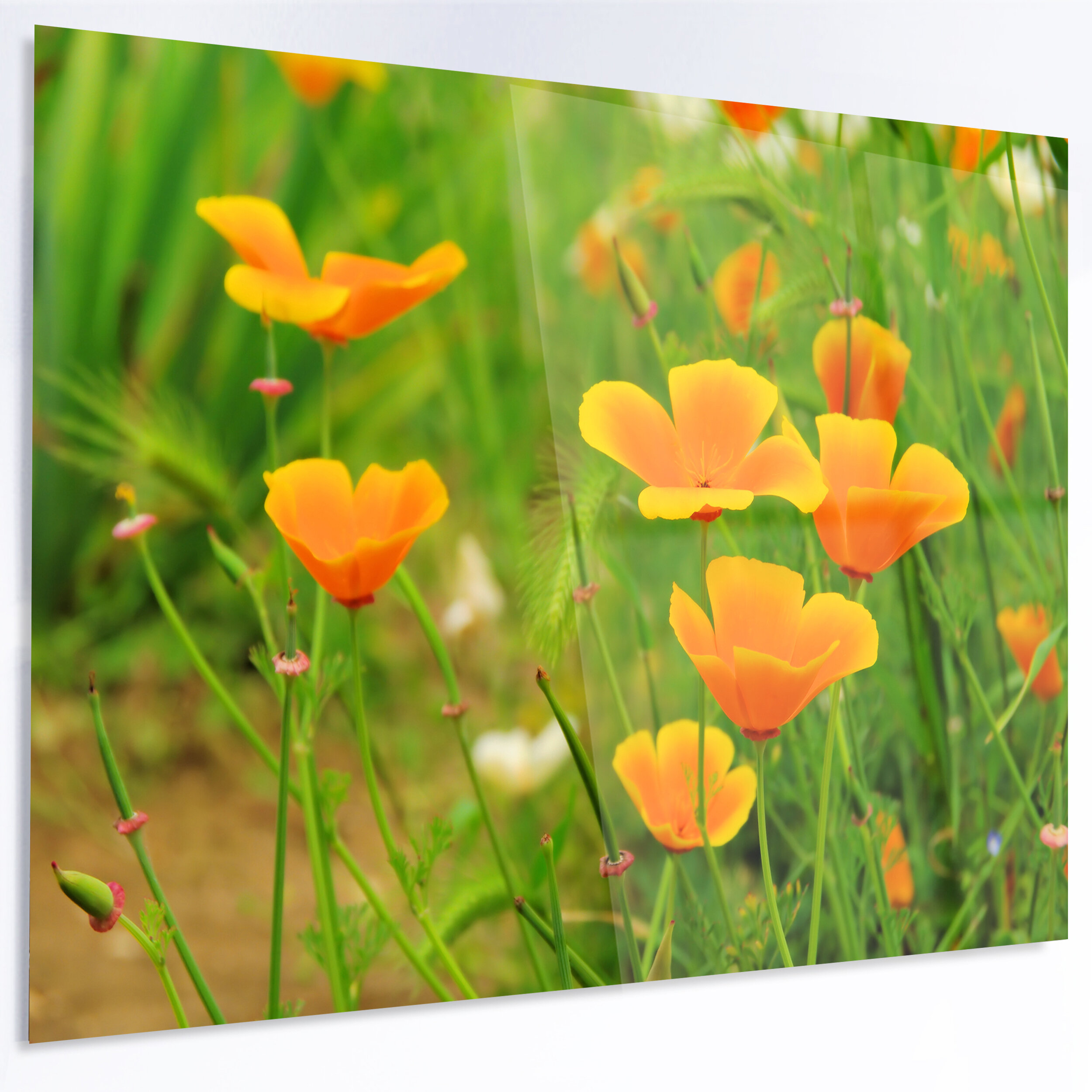 Designart Bright Yellow Poppy Flowers Photographic Print On Metal