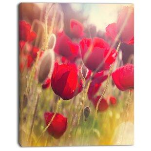 Poppy flower wall art wayfair poppy flowers meadow in sunlight graphic art on wrapped canvas mightylinksfo