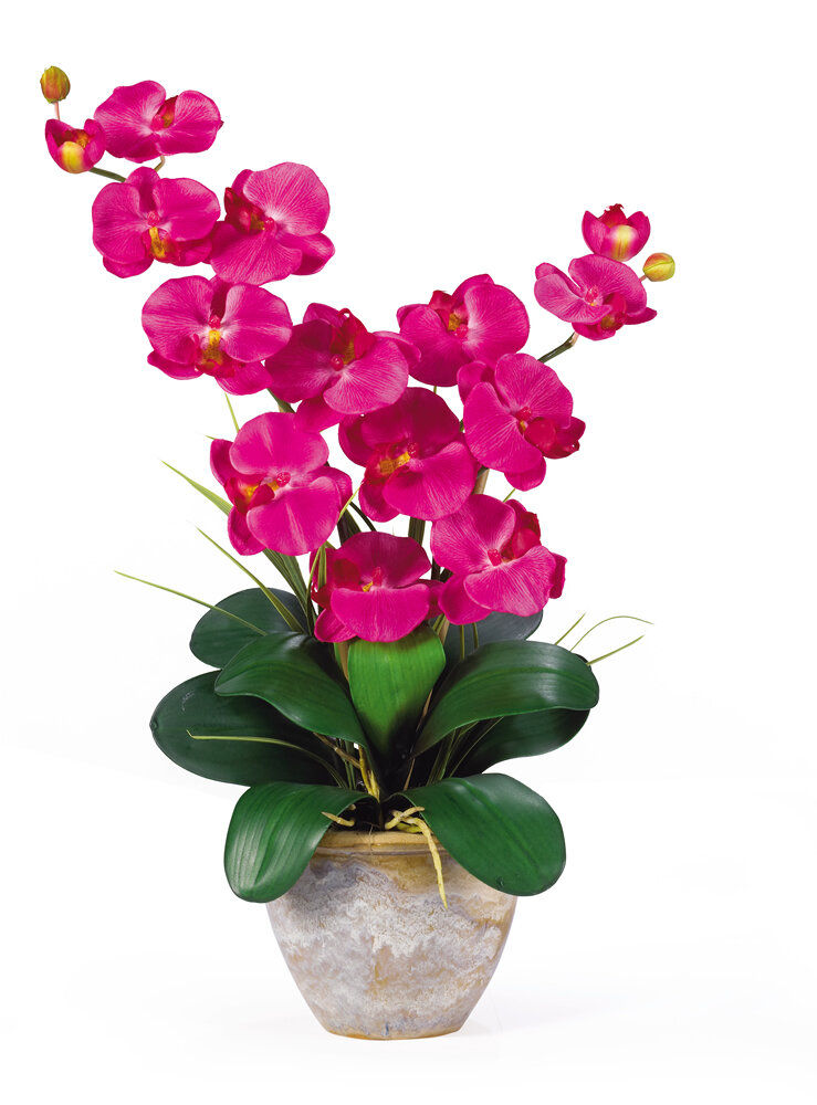 Nearly natural double phalaenopsis silk orchid flowers in beauty nearly natural double phalaenopsis silk orchid flowers in beauty pink reviews wayfair mightylinksfo