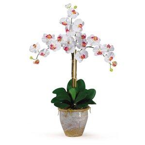 triple silk orchid flower - Silk Orchids