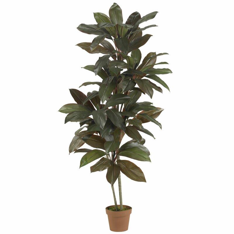 Floor Indoor Plants You\'ll Love | Wayfair