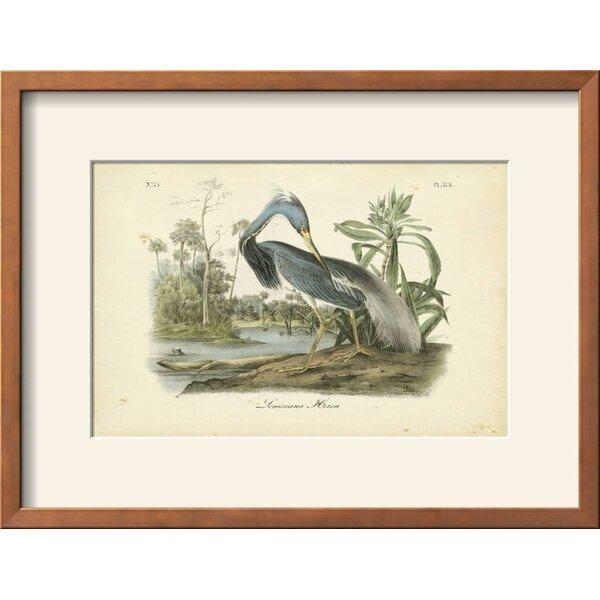 5ab04fa26b0 Audubon Prints