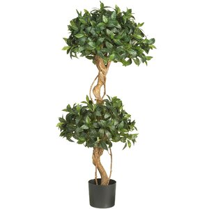 Sweet Bay Double Ball Round Topiary in Pot