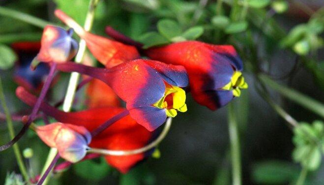 Spring flowers to plant now wayfair spring flowers to plant now mightylinksfo