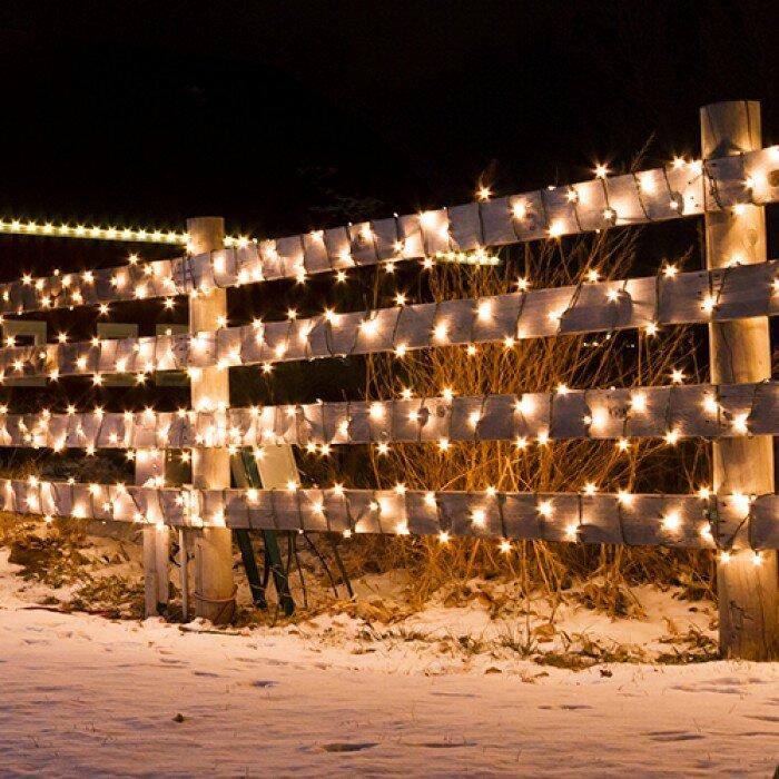 The Holiday Aisle Liteup 50 Solar String Lights Reviews Wayfair