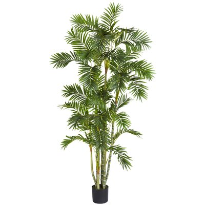 entracing palm tree type house plant. Areca Palm Tree in Pot  by Beachcrest Home Nearly Natural Double Robellini Planter Reviews Wayfair