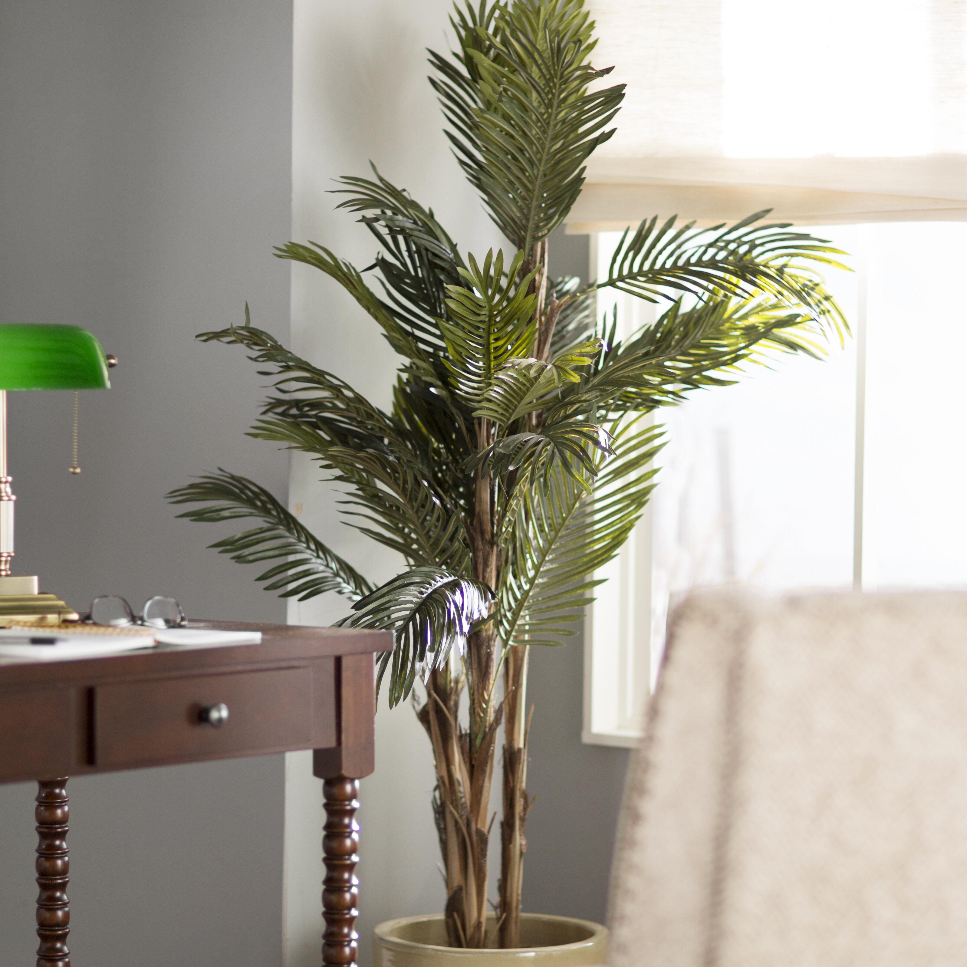 Robellini Palm Tree in Pot