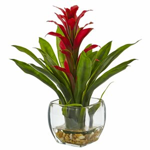 Bromeliad Arrangement in Vase
