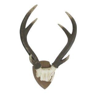 Resin Deer Antlers Wall Décor